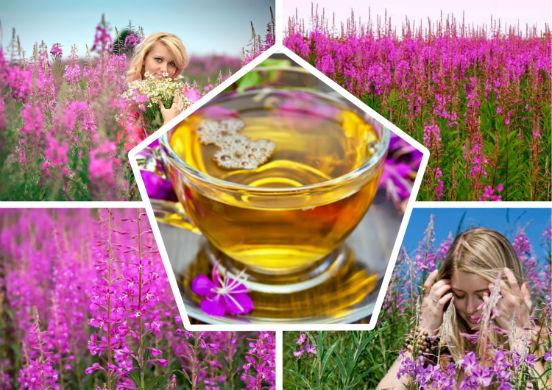 Иван чай для беременных польза и вред 60