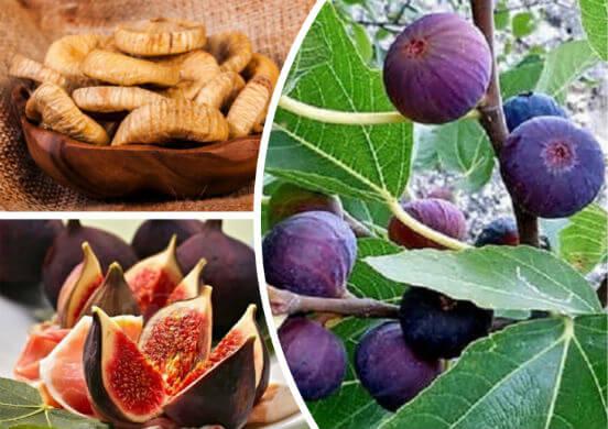 Полезные свойства инжира - целебные качества сухофруктов для организма женщин, мужчин и детей