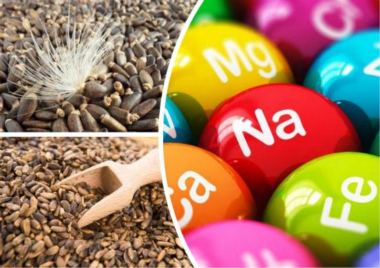 Чем полезны семена расторопши для организма человека и в каком виде их применяют?