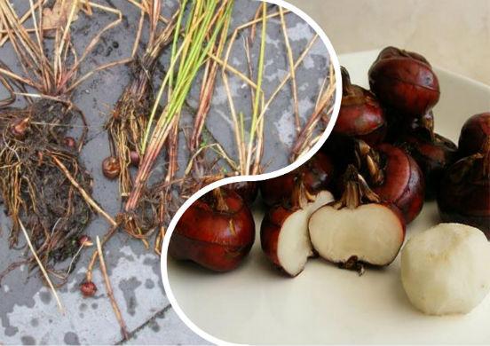 Водяной орех - азиатский плод, который активно применяется в кулинарии и медицине
