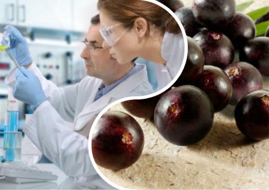 Ягоды асаи - маркетинговый ход или полезный продукт для организма человека